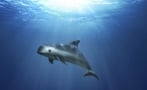 Mexico allowed the extinction of the vaquita
