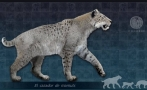 Scimitar-toothed cats also lived in Mexico, study shows