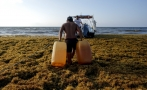 Sargassum in Mexican Caribbean killed specimens from 78 marine species in 2018