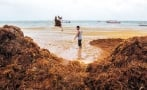 Giant sargassum formation approaches Mexican beaches