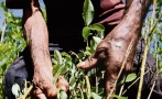 Mexican drug cartels thrive in Colombia