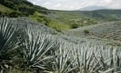 Mounting global demand worries Tequila producers