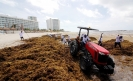 Scientists forecast new seaweed plague on Mexican beaches