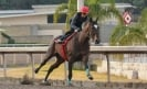 Mexican horse Kukulkán to compete at Pegasus World Cup
