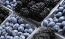 Mexico's berry exports could overthrow avocados