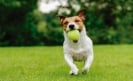 Safe boarding options for your pets this Summer