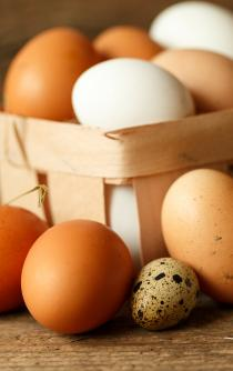 12 reasons why you love the egg