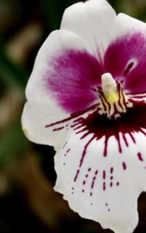 Spring Orchids Exhibition in Mexico City