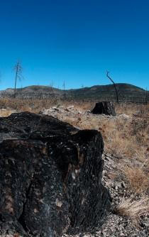 """""""Narcotala,"""" how drug cartels have infiltrated the forest industry in Chihuahua"""