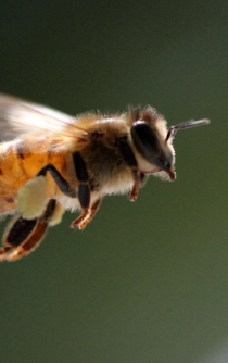 Without bees, the world would face a food crisis