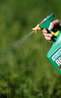 Monsanto acquisition by Bayer will be limited in Mexico