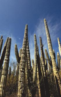 Tehuacán-Cuicatlán valley is now a World Heritage site
