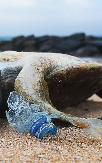 The world is drowning in plastic