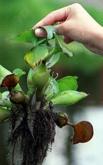 IPN students create hi-tech water lily collector