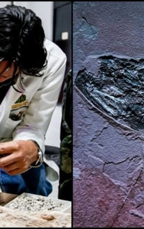 Mexico boasts new paleontology research lab