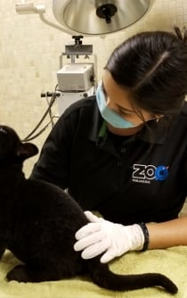 Rare black jaguar is born at Culiacán Zoo in northern Mexico