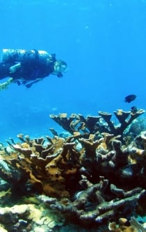 5 new reefs discovered in the Gulf of Mexico