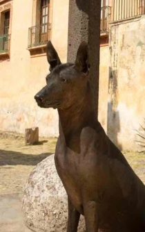 Xoloitzcuintle: The Mexican hairless dog who will guide you to the underworld