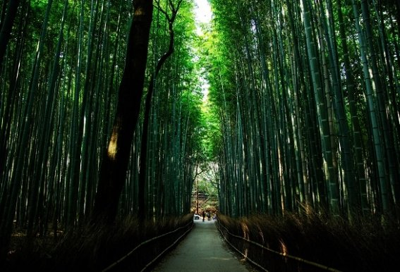 bosque-de-bambu-espectacular.jpg